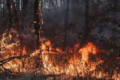 В Воронежской области отменили противопожарный режим