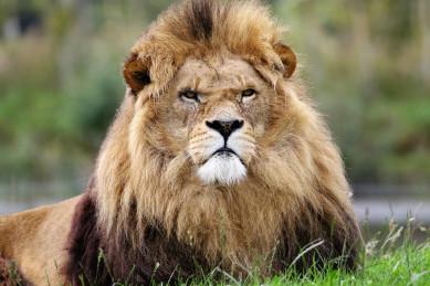 Львам лучше не слушать советы друзей, а Рыб ожидают выгодные знакомства