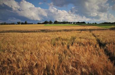 Более 5 тысяч рабочих мест появится на предприятиях сельского хозяйства Воронежской области