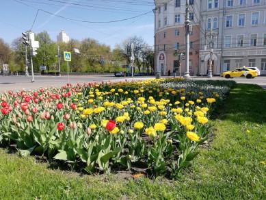 Воронежские власти готовы потратить на уход за клумбами и газонами более 25 млн рублей