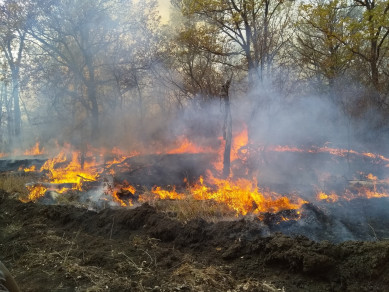 Ландшафтный пожар вспыхнул рядом с Хопёрским заповедником в Воронежской области
