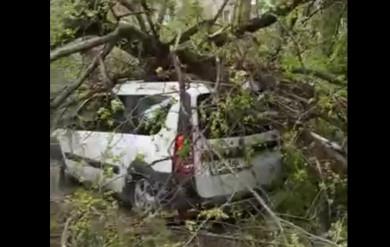 Сильный ветер повалил деревья на машины в Воронеже