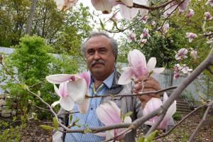 Воронежец на даче выращивает 80 видов магнолий