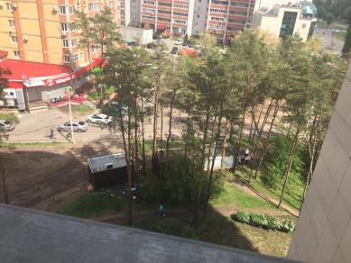 Воронежцы не дали Северному лесу превратиться в рынок
