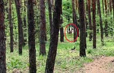В парке «Танаис» заметили оленей