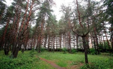 Северный лес в Воронеже станет памятником