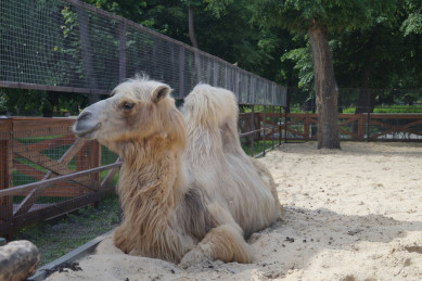 Как зоопарк и заповедник будут работать в Воронеже на июньских праздниках