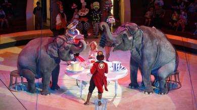 «Говорящие слоны — это невыдумка!»
