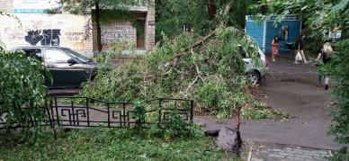 Спасатели подсчитали, сколько деревьев повалил ураган в Воронеже