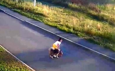 Бездомный пёс загрыз маленькую собаку на глазах у её хозяйки