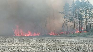 В Воронежской области произошёл лесной пожар