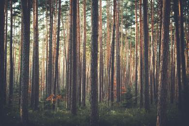 В Воронежской нагорной дубраве обнаружили незаконную вырубку деревьев