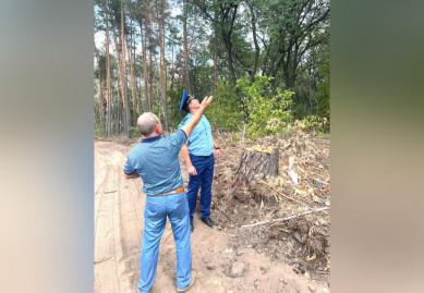 Вырубкой деревьев в Воронежской нагорной дубраве заинтересовалась прокуратура