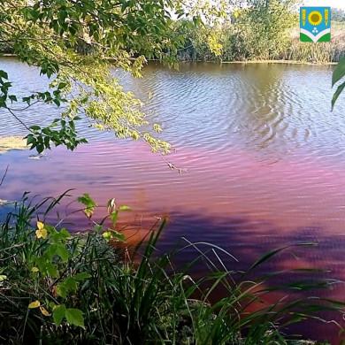 Озеро в Воронежской области окрасилось в розовый цвет