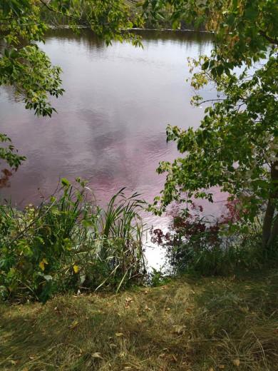 Экологи обследовали «розовое озеро» в Воронежской области