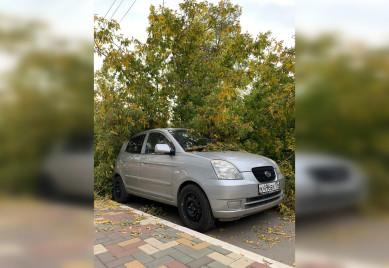 Дерево рухнуло на три машины в Воронеже