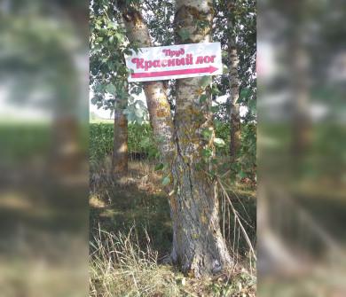 Экологическая катастрофа: воронежцы сообщили о нехватке воды