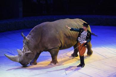 Воронежцы увидят ручного трёхтонного носорога!