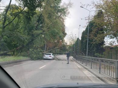Из-за упавшего дерева в Воронеже образовалась мёртвая пробка