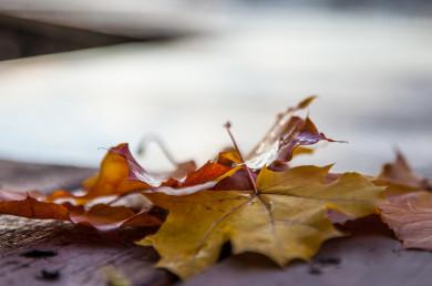 Прогноз погоды вВоронеже навторник, 5 октября