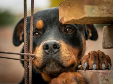 Воронежцы: «Мужчина регулярно натравливает собаку на людей»