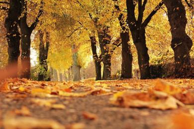 Прогноз погоды в Воронеже на понедельник, 18 октября