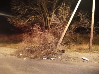 Молодой водитель погиб в Воронеже, врезавшись в дерево