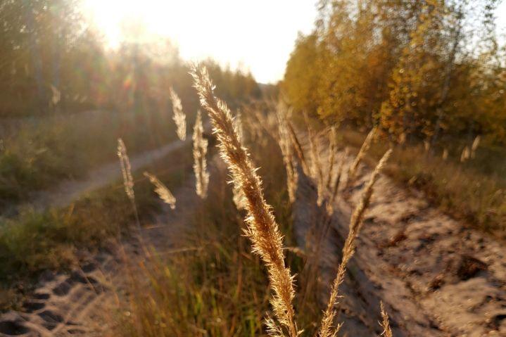 В Липецкой области грибами отравились 20 человек