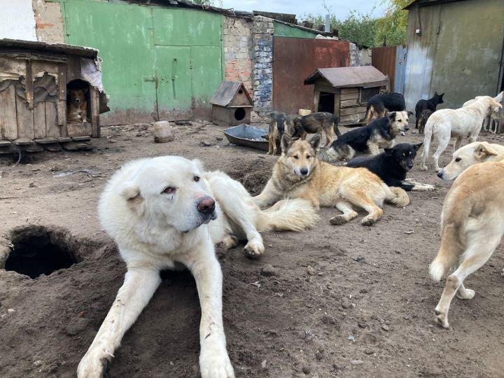 «За одну кровавую ночь убили около 20 собак в приюте «Дора»