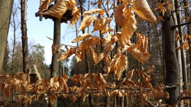 Погода в Воронеже насреду, 27 октября