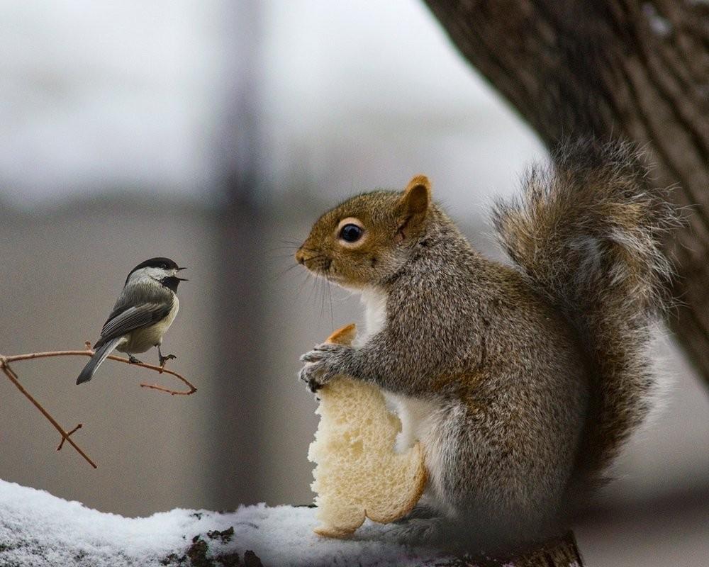 Прикольные картинки с птицами зимой, сирени картинки