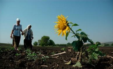 В Воронежской области из-за природных катаклизмов погибло 130 тыс. га посевов