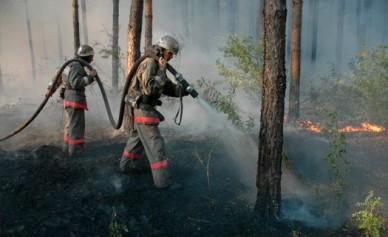 Воронежская область вошла в тройку самых пожароопасных в ЦФО