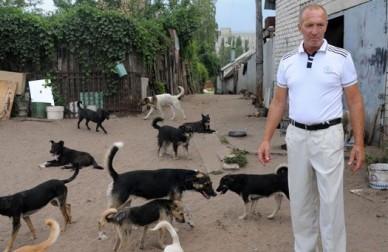 Зоозащитники: «Убийц собак в Воронеже будут искать полицейские»