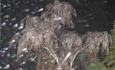 МЧС: в Воронеже ожидаются метели со штормовым ветром