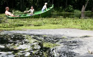 Какая воронежская река самая чистая?