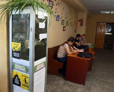 Выпускница ВГУ придумала экоурны, которые хочет поставить по всему городу