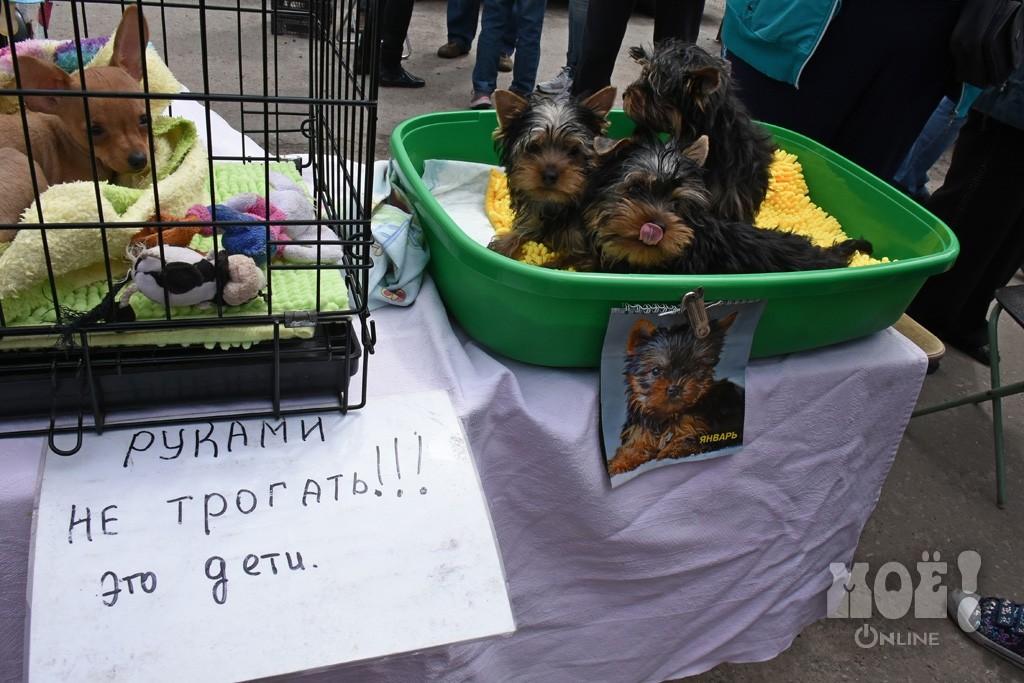 птичий рынок в санкт петербурге фото этом