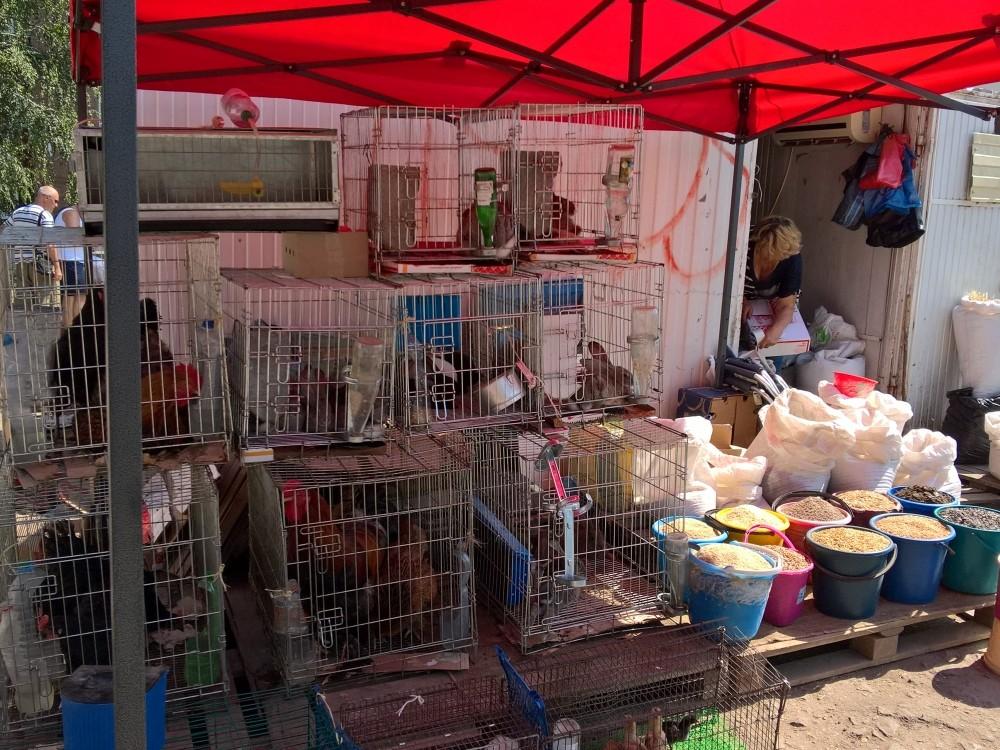 немецкое холодное птичий рынок в санкт петербурге фото разные годы