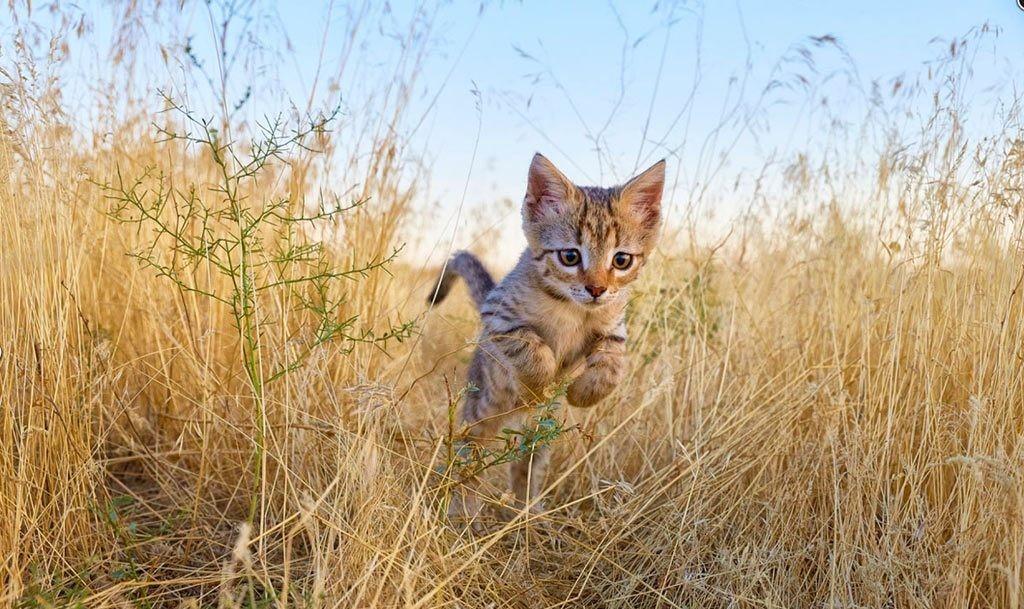 москве профильное котята дикой степной кошки фото актер
