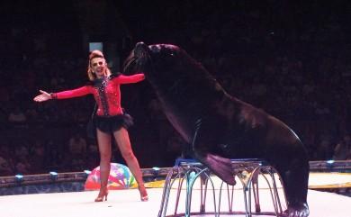 В воронежском цирке забил фонтан из трёхсот струй