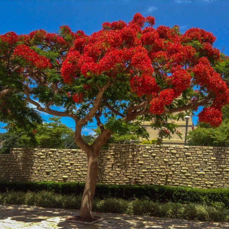 получила растения деревья фото хотите