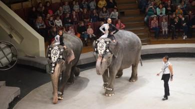 В Воронеж приехал цирк, где слоном управляет трёхлетний мальчик
