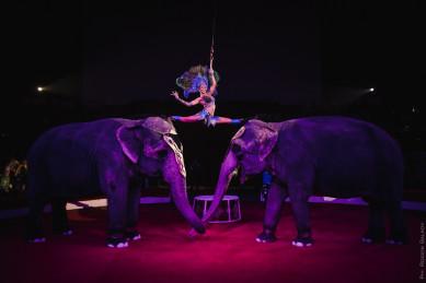 В Воронеже выступят слонихи, покорившие сердце Сергея Шнурова