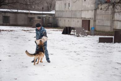 Воронежским студентам полицейские показали киношные трюки