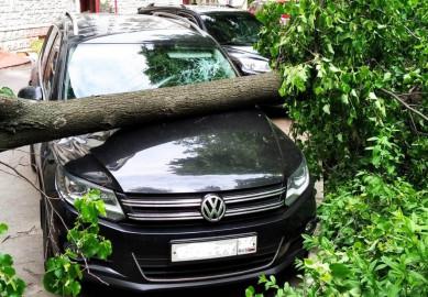 Дерево рухнуло на легковушку в центре Воронежа