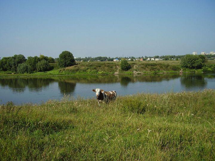 ТЕСТ: Что вы знаете о Воронежской области?